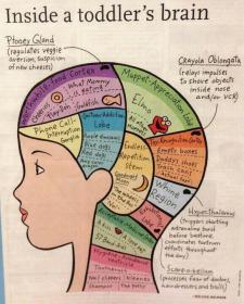 toddler-brains